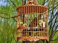 宠物鸟换毛期的几点注意事项