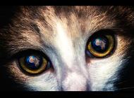 猫咪眼中的世界是绿色的 你知道吗