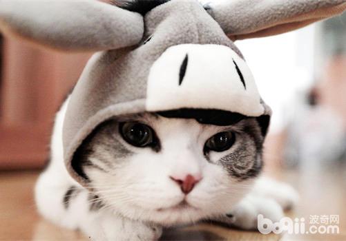 网上只要稍微搜索一下,就能找到很多猫主子被激光笔逗得疯狂的景象。确实作为一个逗猫神器,相比其他玩具是有奇效的。而且作为主人来说也比较省力气,看着自家平时高冷到不行的猫主子为之疯狂,也是一件非常乐在其中的事情。怎么用激光笔逗猫咪玩耍,这应该是一件非常简单的事情。但是在这个过程中,为了我们和自家猫咪的安全,还是有几点注意事项需要好好说道说道。   1.