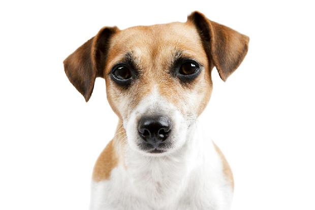 狗狗喂养的4点基本原则