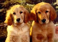 犬的骨折的病因与治疗方法