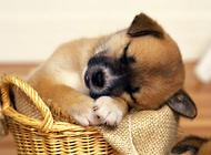 狗狗呕吐原因及治疗