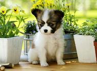 冬季应该如何护理狗狗