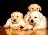 想给老人买狗狗作伴,什么狗适合老人养呢?