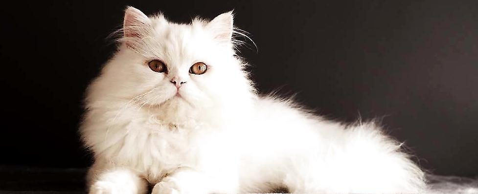 基础图案动物黑白简单