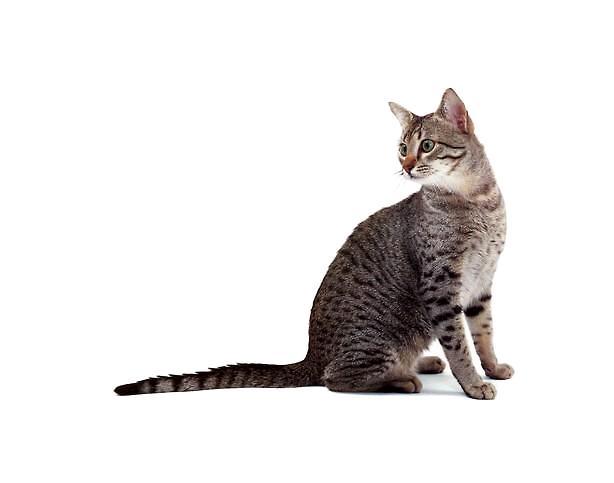 猫身体结构图
