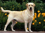 狗狗的追踪训练