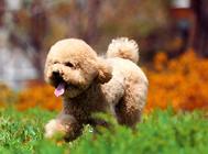 怎么检查狗狗是否肥胖