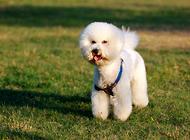 如何训练自己的宠物狗顺从