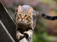 猫皮肤病的治疗,猫咪得了皮肤病怎么办