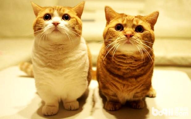 搞定猫咪坏脾气