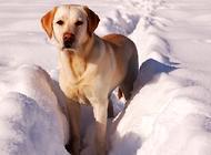 狗狗为什么口臭 需要如何防治