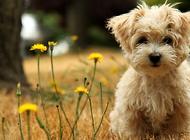怎么给狗狗洗脸 需要注意什么