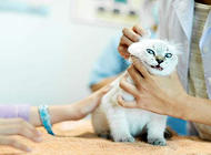 貓為什么要絕育?