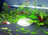 今天来教你如何diy生态鱼缸