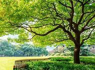 香樟树的特点,以及香樟树的作用有哪些?