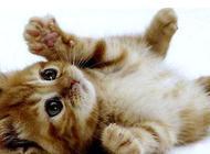 小猫多久断奶?如何断奶?