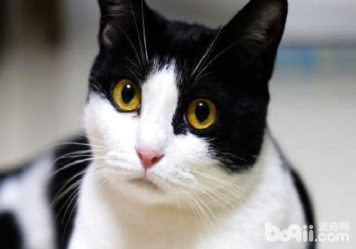 黑白猫1.jpg