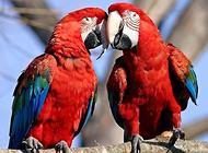 金刚鹦鹉多少钱一只?怎么选择合适的金刚鹦鹉?