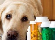 小狗拉肚子吃什么药?狗狗拉肚子的原因有哪些?