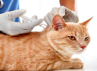 猫得狂犬病的症状