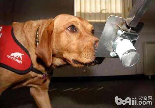 你知道狗狗害怕什么气味吗?