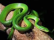 常见的宠物蛇种类都有哪些?