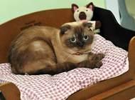 猫咪可不可以吃巧克力?