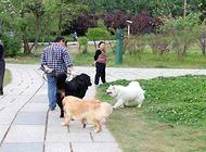 你真的知道改如何养狗吗?