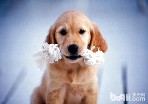 狗狗反刍的原因有哪些?