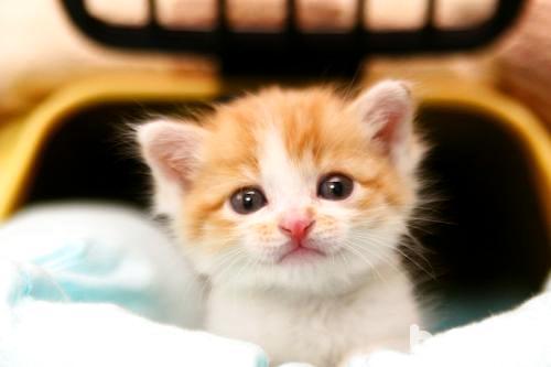 幼猫怎么养?幼猫饲养技巧介绍