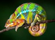 宠物蜥蜴种类有哪些?