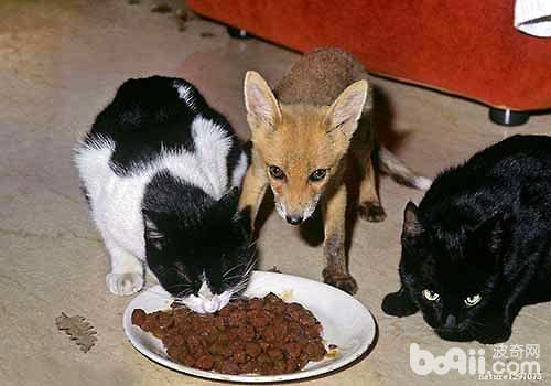 猫不能吃的食物都有哪些?