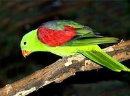 红翅鹦鹉多少钱一只?红翅鹦鹉价格盘点