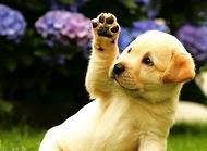 狗狗后腿发抖怎么办?狗狗后腿发抖原因有哪些?