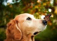 狗狗为什么鼻子干 狗狗鼻子干的原因有哪些