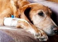 狗狗脱水怎么办 狗狗脱水怎么预防