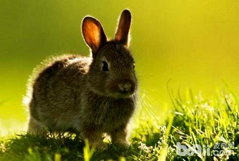 宠物兔子好养吗 宠物兔子怎么养-轻博客