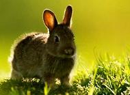 寵物兔子好養嗎 寵物兔子怎么養