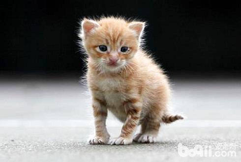 幼猫好养吗幼猫怎么养