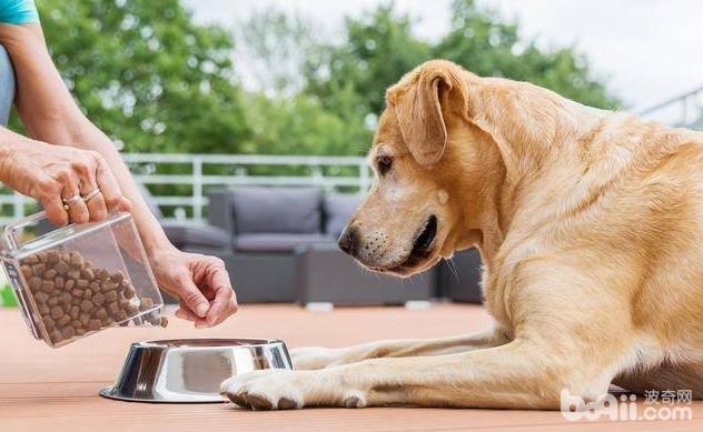 狗狗临产前都有哪些是需要准备的?