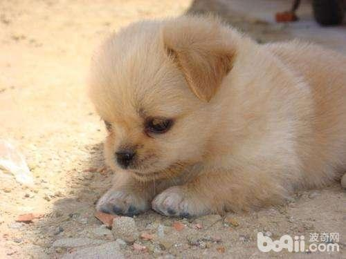 养狗之前要做好哪些心理准备?