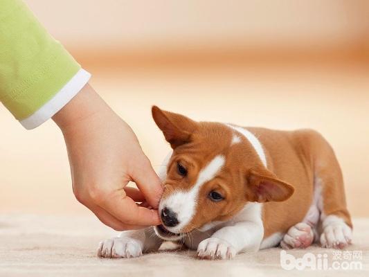 训练狗狗,训练狗狗的方法?