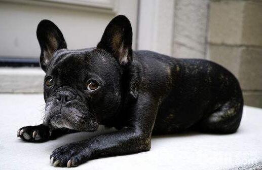 a_狗狗生气的表现有哪些?狗狗生气了怎么办--成犬饲养[新闻]