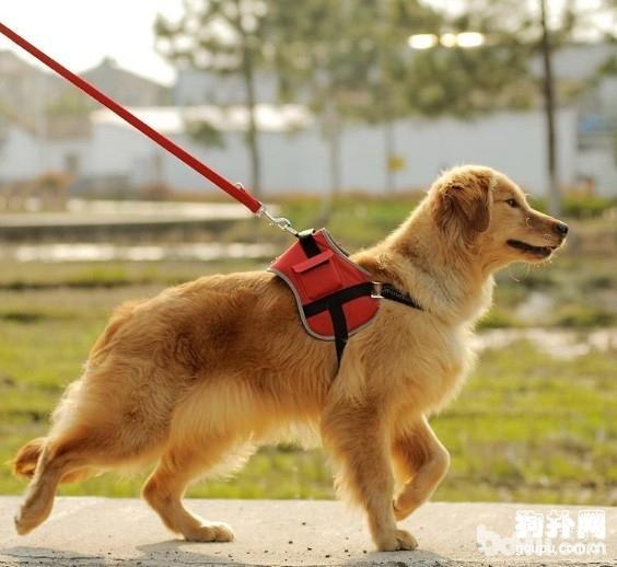 养狗必知必须要做到的6件事