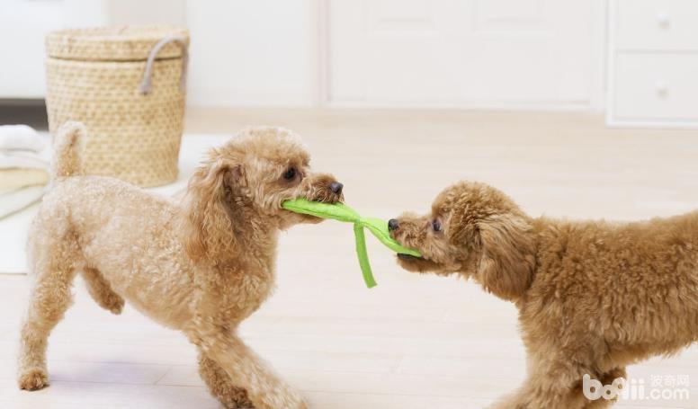最适合狗狗的玩具种类都有哪些?