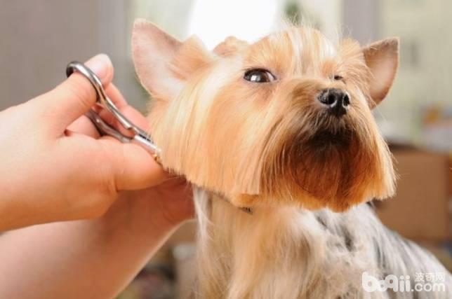 以下原因告诉你宠物美容为什么比人美容贵