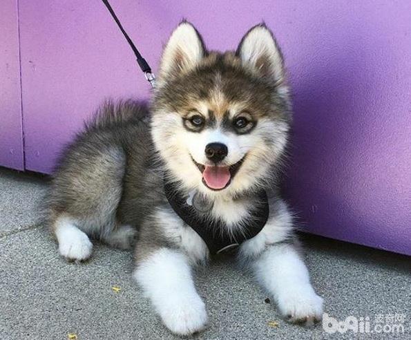 新手养狗须知,新手养狗的注意事项都有哪些?
