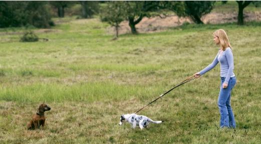 狗狗培养,狗狗是如何培养出来的?