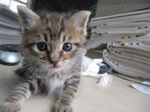 小猫怎么养?小猫常见病